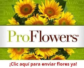 proflowers ad enviar flores por internet