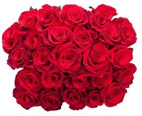 rosas dia de las madres