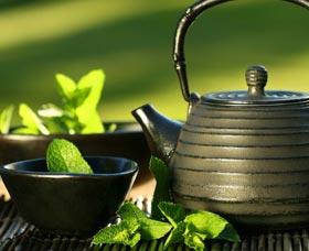tomar te verde perder barriga