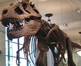 Atracciones de New York Museo Americano de Historia Natural